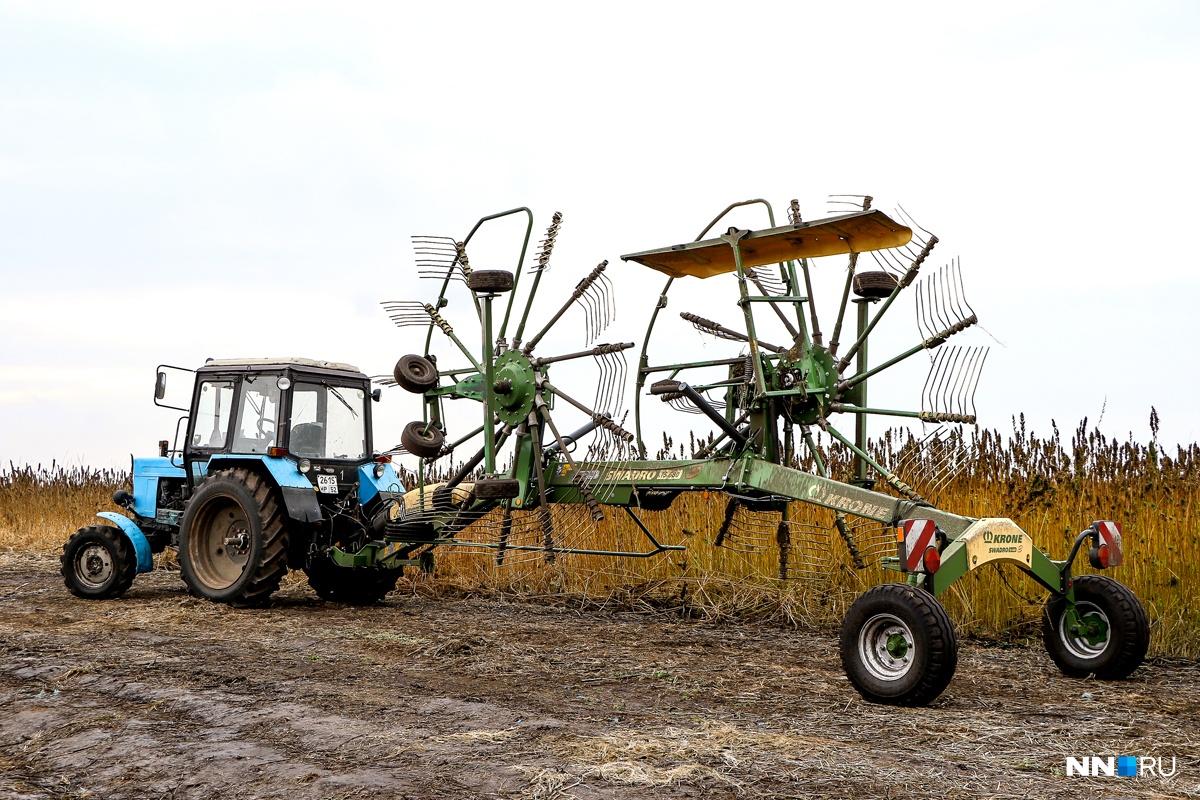 Производство конопли в Нижегородской области будет расширяться