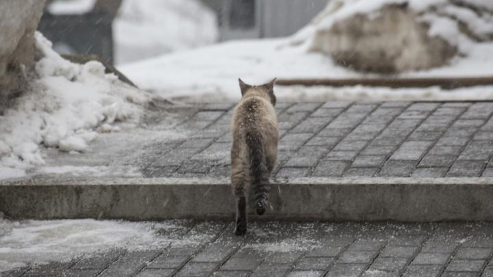 Ирек Ялалов: «В Уфе появится приют для бездомных животных»