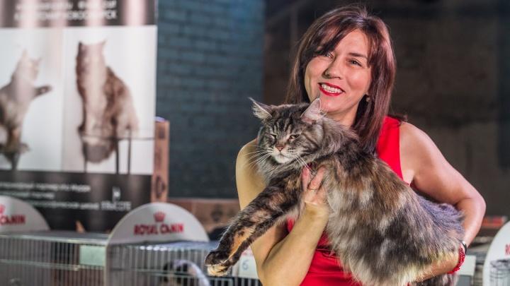 Девушки и котики: в Новосибирске прошла выставка необычных и очень милых кошек