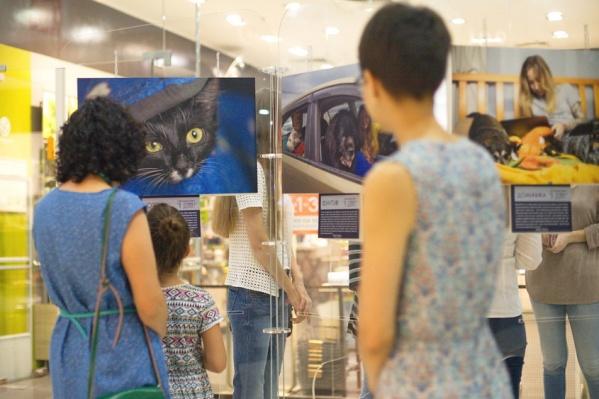 Выставка состоит из 18 фоторабот
