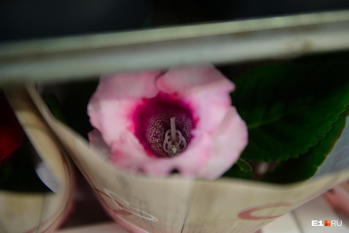 Самый весенний фоторепортаж: как в Кольцово принимали 74 тонны роз и тюльпанов из Амстердама