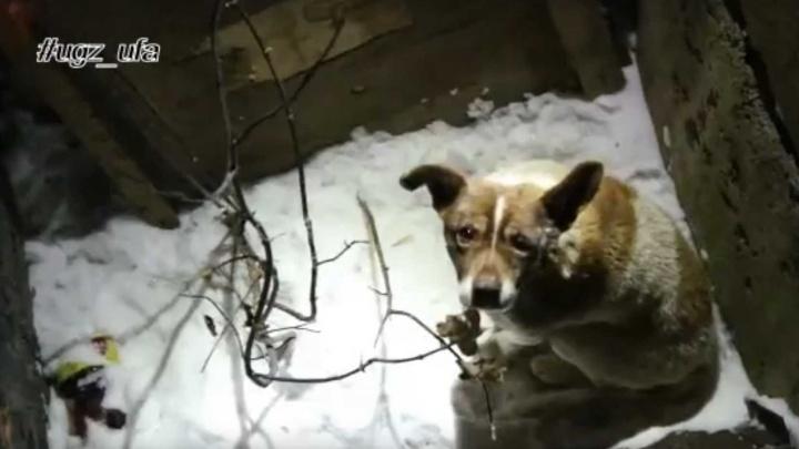 Барбос упал в яму: в Уфе сняли на видео спасение собаки