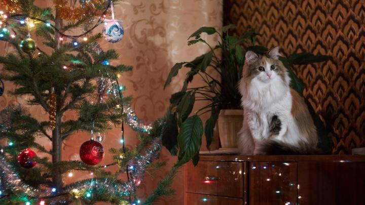 Елки хвостатые-2: новосибирцы показали НГС своих новогодних котов и собак (и одного хоря)