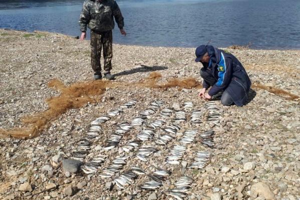 Мужчины ловили рыбу сетью, а это запрещено