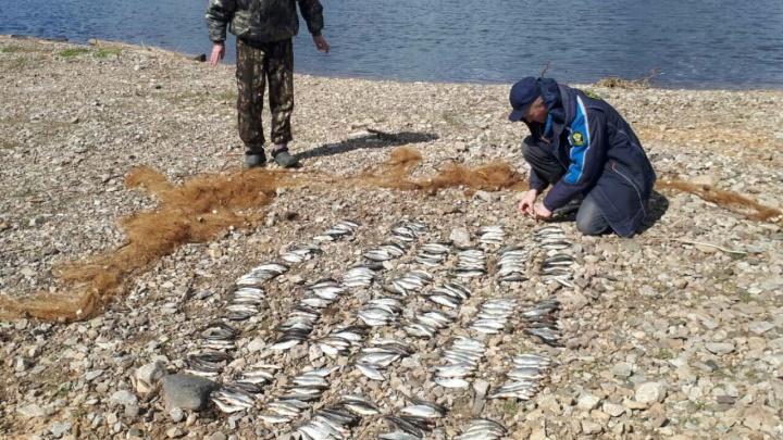 За ловлю ельца сетью задержали двоих рыбаков из Богучан