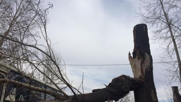 Последствия урагана: в Уфе стихия снесла кровлю и с корнем вырвала деревья