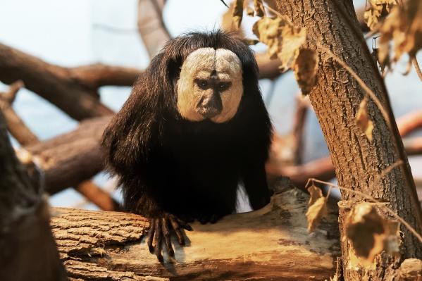 Новые обитатели приехали в зоопарк из Германии