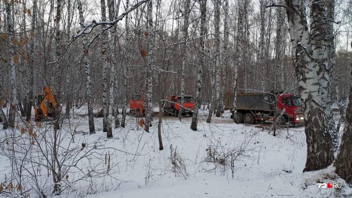У Гагаринского парка начали вырубать деревья. Кто и зачем?