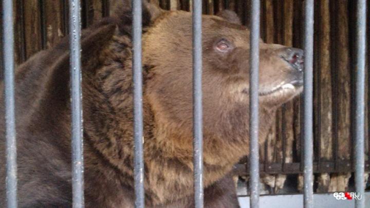 Нужно переезжать: зоопарку вновь прочат соседство со стадионом «Самара Арена»
