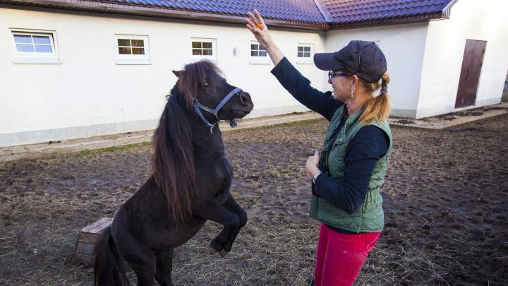 Косички для пони, обнимашки с хаски и уральский Диснейленд: куда семье с детьми поехать в каникулы