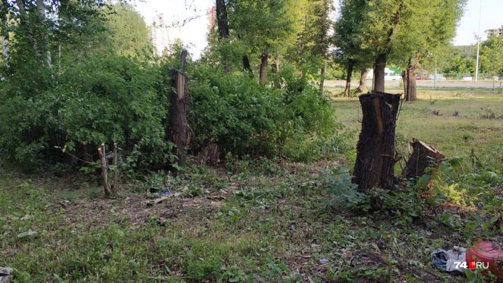 «Превращают Челябинск в Припять?»: во дворе на Северо-Западе срубили полтора десятка деревьев