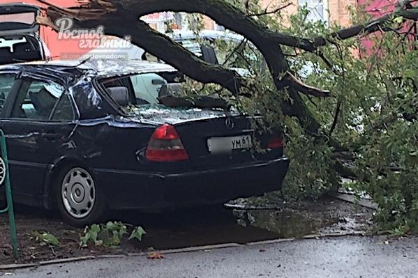 Машина стояла под деревом