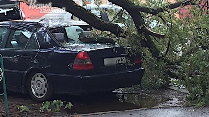 В Ростове из-за шквалистого ветра ветка сухого дерева рухнула на Mercedes