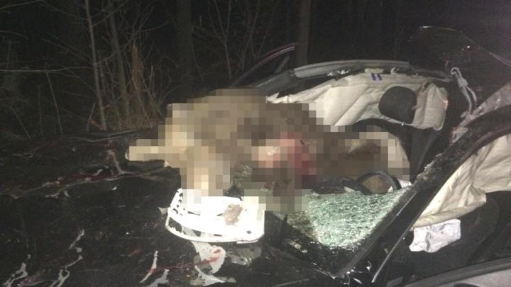Выскочил на дорогу: в Башкирии водитель на «Audi» сбил лося и опрокинул машину в кювет
