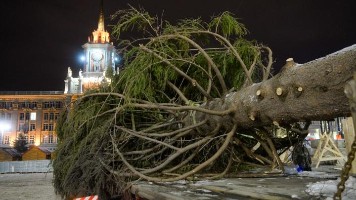 Горожан не позвали: новогоднюю ёлку на площади встретили только журналисты, медведи и оркестр