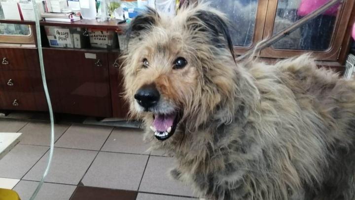 Приют «Друг» будет делать химиотерапию больной брошенной собаке