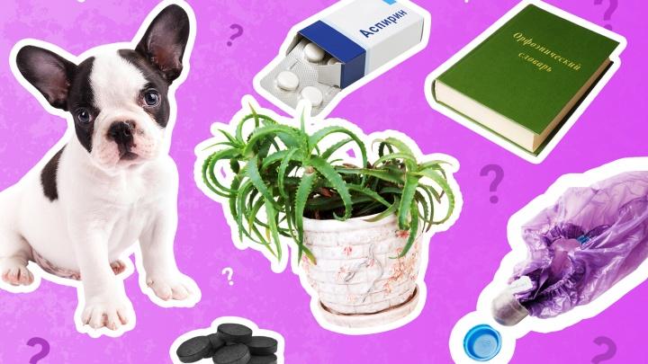 Активированный уголь, щенок и словарь: рассказываем про самые странные подарки ко Дню учителя