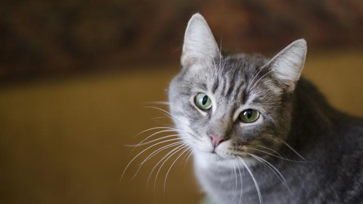 Оторвитесь по полной ради котиков и собачек: в Архангельске пройдет благотворительный концерт