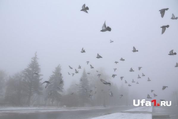 Зима уже вступила в свои законные права