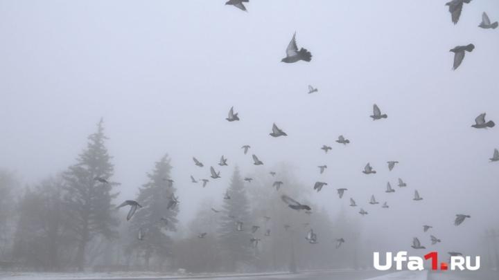 Погода в Башкирии: суббота будет морозной и туманной