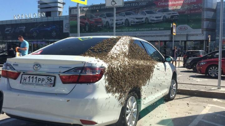 Пчелы против Toyota:в Кольцово насекомые атаковали автомобиль, стоящий на месте для инвалидов