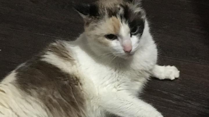 Неравнодушные жители Лесосибирска долбили бетон в подъезде ради спасения бездомной кошки