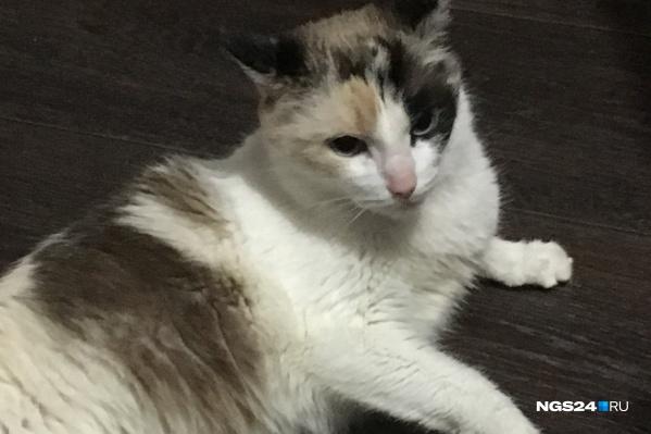 Кошка громко мяукала, так как не смогла выбраться сама