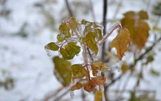 Ко Дню Победы в Зауралье придут заморозки и туман