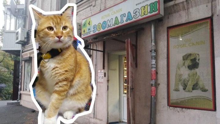 Хозяйка зоомагазина на Кировском выходила кота без лапки и сделала своим помощником