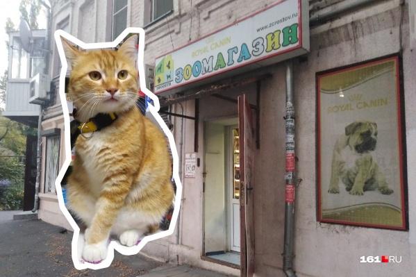 Котик-инвалид обосновался в зоомагазине и помогает хозяйке встречать клиентов