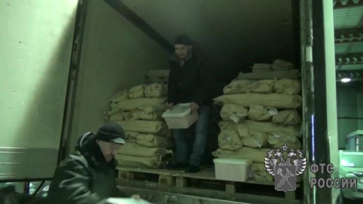 На границе поймали фуру с 20 тоннами рыбы и икры — деликатесы остались в Новосибирской области