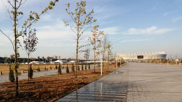 Голубев заявил, что деревья и кусты возле «Ростов Арены» засохли по вине подрядчика