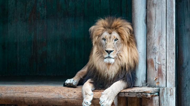 Культовые места Ростова: как живой уголок в школе стал одним из самых больших зоопарков Европы