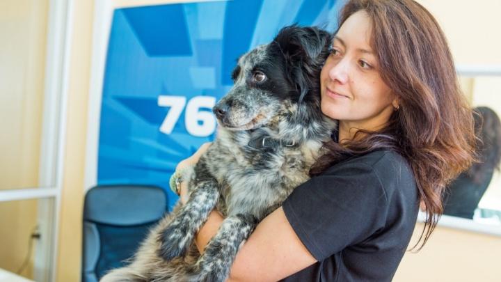 Колонка журналиста 76.RU: «Давно пора ввести налог на собак»