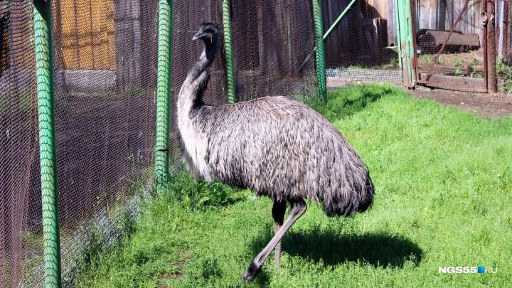 В зоопарке смогли откачать страуса после пожара