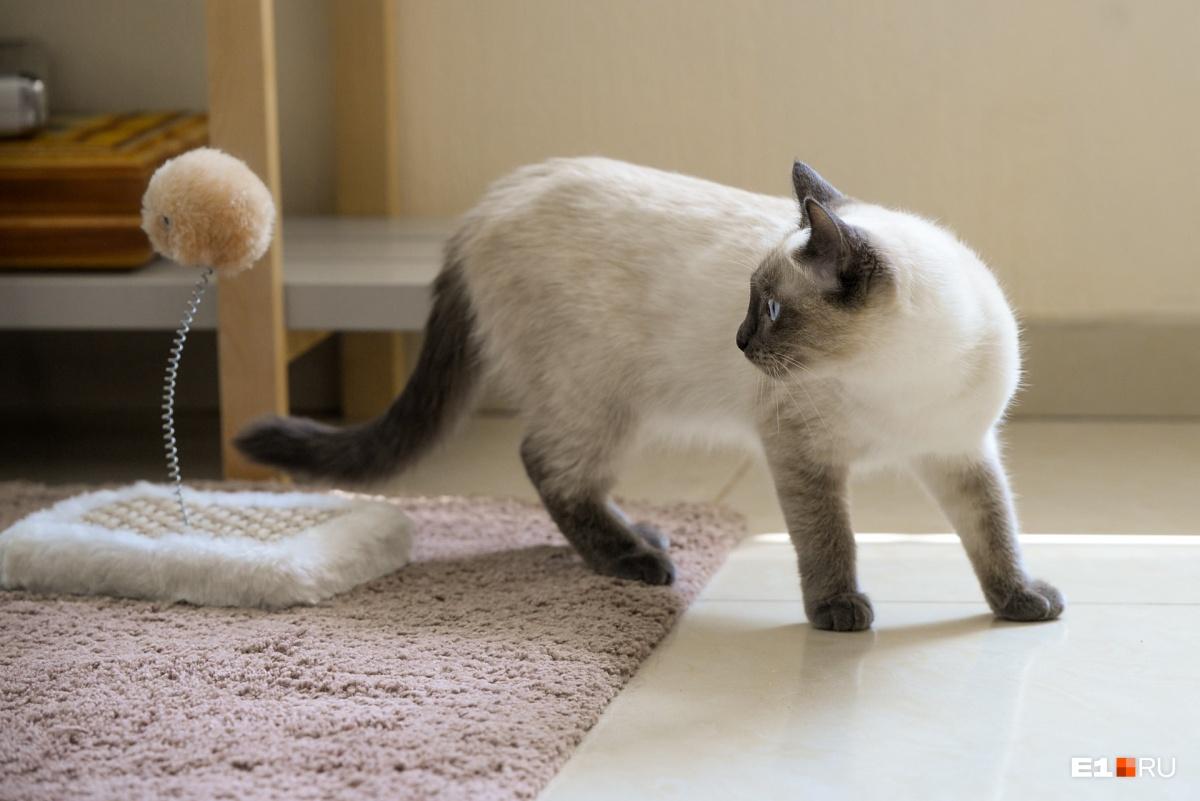 Познакомиться с кошкой Универсиадой или забрать ее к себе домой можно уже в эти выходные