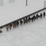 «Участие должно быть добровольным»: эксперт оценил «тактическую игру» пермских школьников