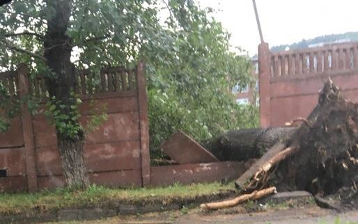 Тополя обрушили забор и завалили остановку во время ливня