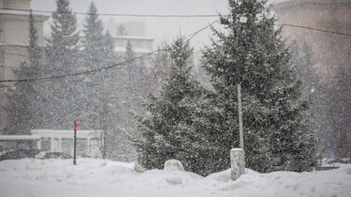 Новосибирск накрыла пушистая метель