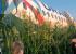 Самолет«Уральских авиалиний», севший в кукурузном поле, демонтировали