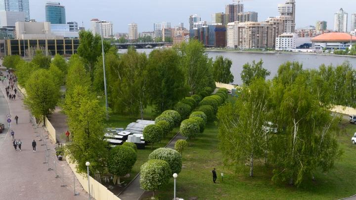Пока все деревья на месте: смотрим, что творится за глухим забором стройки храма Святой Екатерины