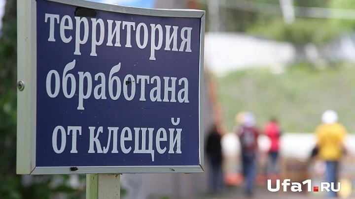 Клещи не отступают: число укушенных в Башкирии достигло 8990 человек