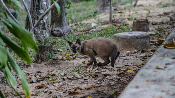 «Они решили, что вправе лишать жизни других»: в Уфе разыскивают живодеров, которые стреляли по коту