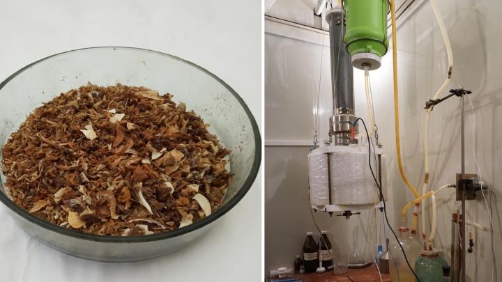 Красноярские учёные придумали, как кормить космонавтов рыбой, а из отходов делать удобрение