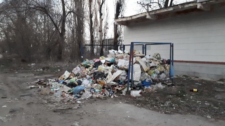 Справились или нет: пришло время оценивать «Управление отходами — Волгоград» — онлайн-трансляция