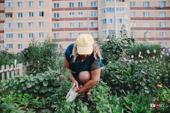 Мы узнали, как появились огородные грядки под многоэтажками в «Ямальском»