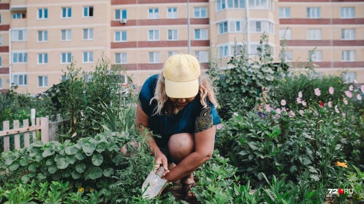 Грядки в окружении новостроек: кто и зачем разбил огороды посреди «Ямальского-1»