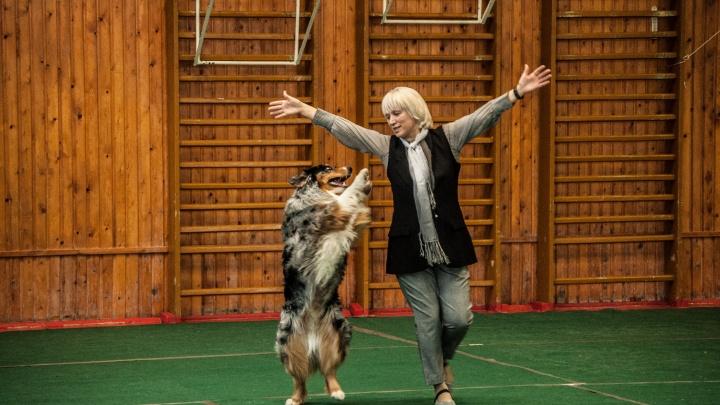 Зажигали под радиохиты: смотрим, как собаки с хозяевами танцевали на соревнованиях в Берёзовском