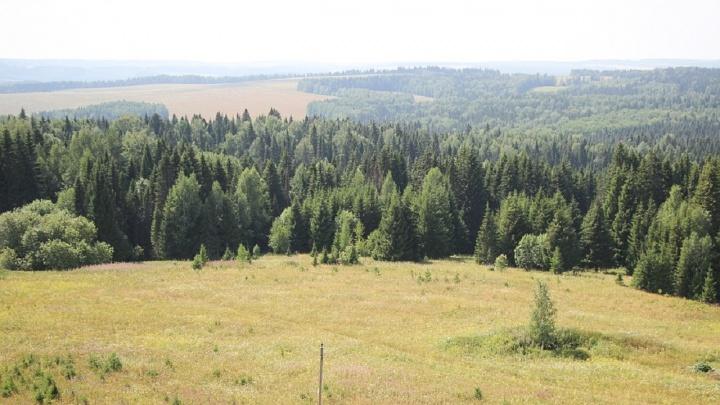 Осторожнее в лесу. МЧС Прикамья предупредило о высокой пожарной опасности