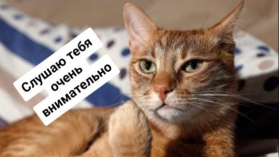 Лучше тысячи слов: читаем самые сочные новости вместе с котами